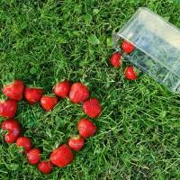 青岛草莓采摘园给你的假日旅行带来新选择