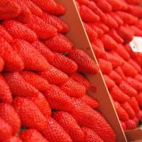 如何避免激素草莓