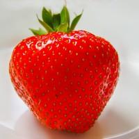 青岛草莓选择